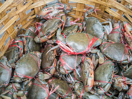 Fresh living crabs caughed tighten in the basket ready for sale in the market Stock Photo