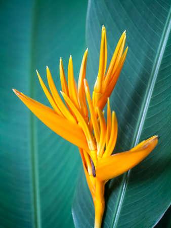 Closeup shot of the bird of paradise flower on green leaves