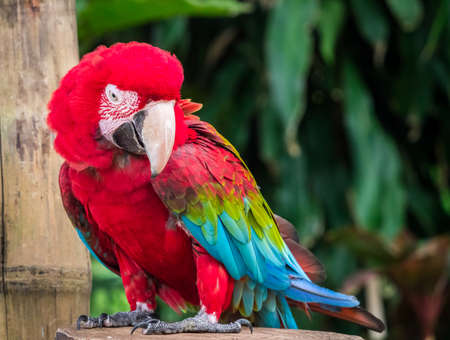 Funny macaw expresses indescribable feeling on his face Stock Photo