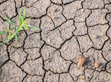 Dry cracked ground with some stone and grass able to use in concept of hot weather