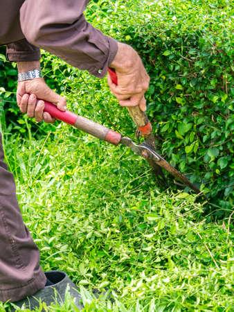 Hand holding gardening tool to trim the bush Stock Photo