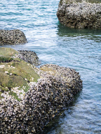 marine crustaceans: Barnacles on the submerged rock by the sea Stock Photo