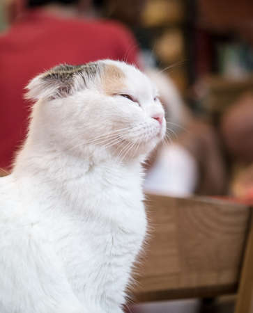 Portrait of smiling cat from the side view Stock Photo