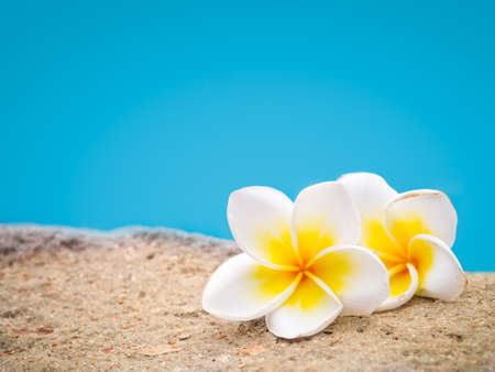 Two plumeria flowers on the sand in front of blue pastel background, leaving copyspace on top