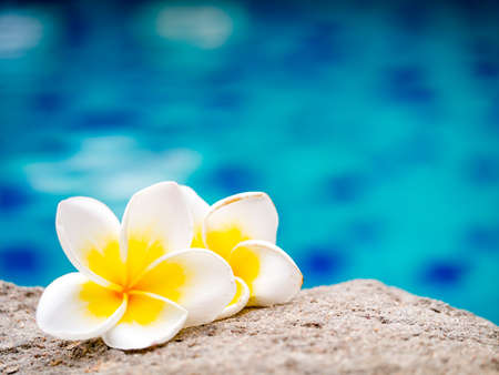 Two plumeria flowers on the sand beside swimming pool Stock Photo