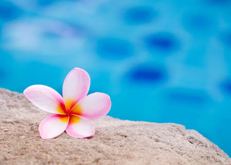Pink plumeria flower on the sand beside swimming pool Stock Photo - 69839705