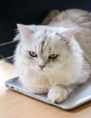 A cat sit on top of laptop, not allowing you to finish your work