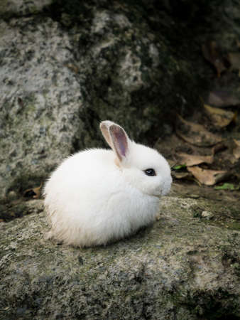 White cute little rabbit relaxing on the stone