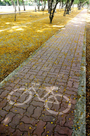 bike pavement in Sprinkled with flowers Stock Photo