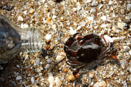 crabs and bottle glass on beach in evening photo
