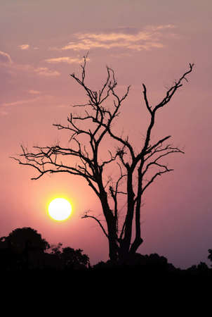 Leafless trees on orange sunset and white clouds on evening
