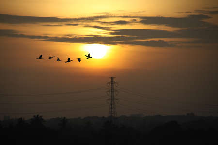 Sunrise in morning with high voltage poles and beautiful bird flying pass photo