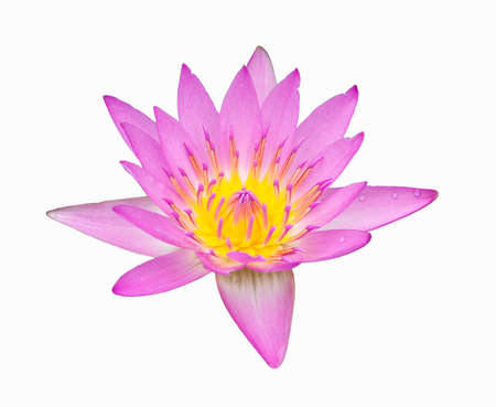 beautiful pink color lotus on white background, isolate photo