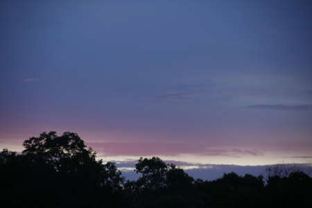 beautiful purple sky with tree top on sunset in evening