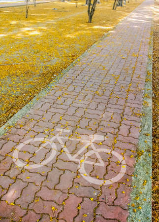 bike pavement in pathway with beautiful yellow flowers on park photo
