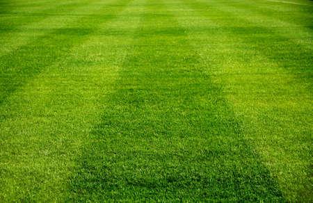 jugando al futbol: l�nea recta en el hermoso campo de f�tbol verde Foto de archivo