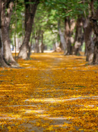 pathway with yellow flowers and green trees inside