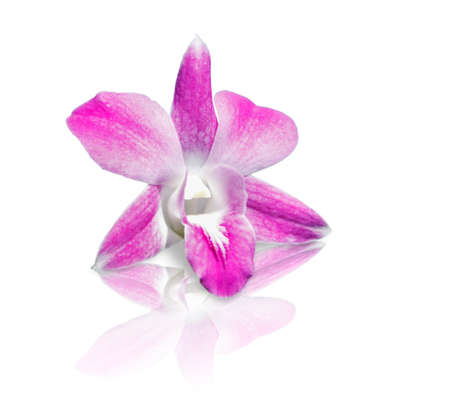 beautiful pink orchids flower with reflect shadow on glass floor photo