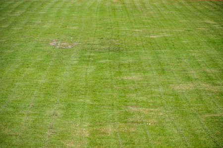 green soccer field was new cut grass photo