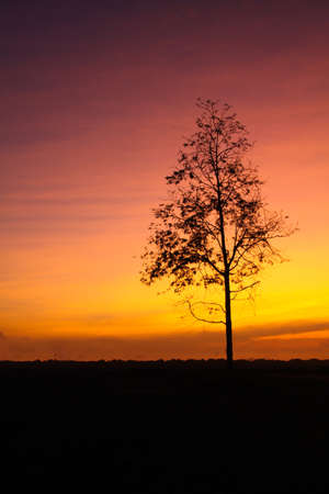 lonely tree with beautiful orange sunrise in morning Imagens