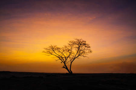 lonely tree with beautiful orange sunrise in morning photo