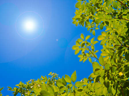 green leaves on summer with sun and blue sky