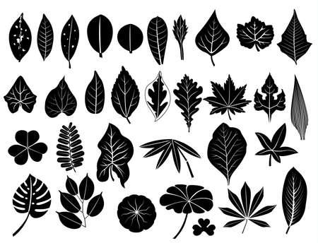 silueta deja conjunto, uva, acacia, helecho, el olmo, el álamo, roble, arce, exuberante de bambú, yuca, madera de teca, Centella, tamarindo, loto, malanga, para la decoración y el diseño Ilustración de vector