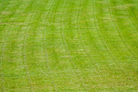 new cutting grass of green soccer field Фото со стока
