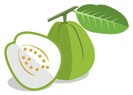 Green guava on white background, vector Illustration