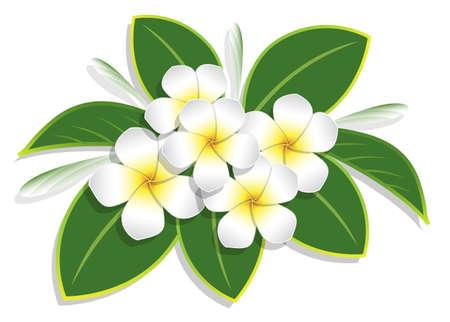 bouquet plumeria et goutte d'eau sur fond blanc, illustration vectorielle