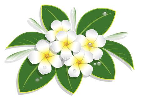 bouquet de plumeria et goutte d'eau sur fond blanc, illustration vectorielle