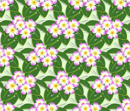 pink plumeria flower pattern seamless on green background
