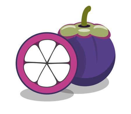 purple mangosteen on white background, vector illustration
