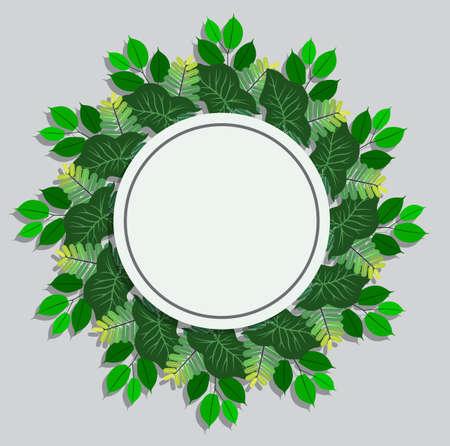 green leaves frame on white background