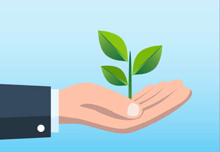 business man hand holding plant