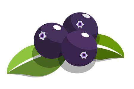purple acai berry flat vector on white background Illustration