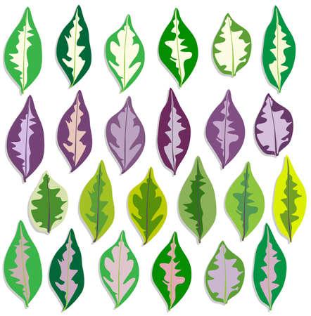 colorful caricature plant leave vector set