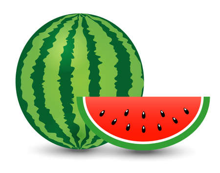 watermelon and piece on white background, illustration, vector Vector Illustratie