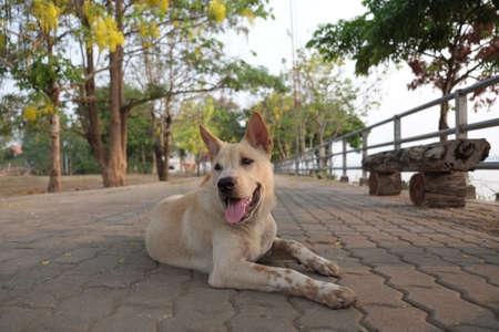 mongrel: Mongrel dog Stock Photo
