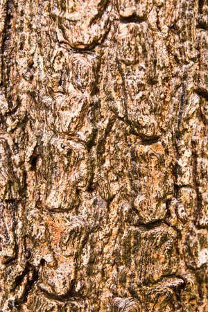 Wood texture, Stock Photo