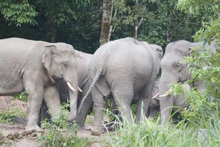 Animalls at Khoayai Thailand,