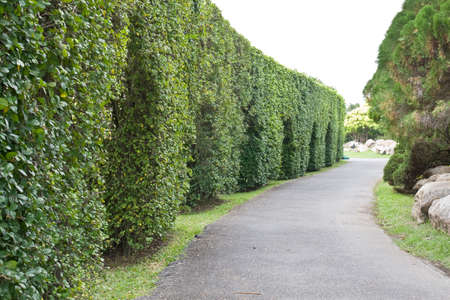 Wall of Tree