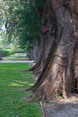 The row of the big tree.