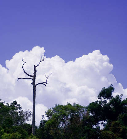 A dead tree stands in the blue sky