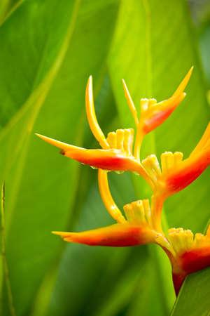 Strelicia flower Stock Photo - 10466261