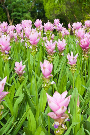 Pink Flowers and plants Stock Photo