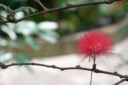 Flower close up  Nature background Stock Photo - 16312713