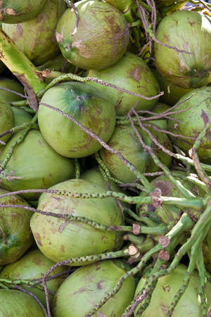 Newly Harvested Green Coconuts