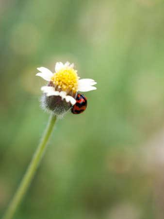 Lieveheersbeestje en kleine grasbloemen