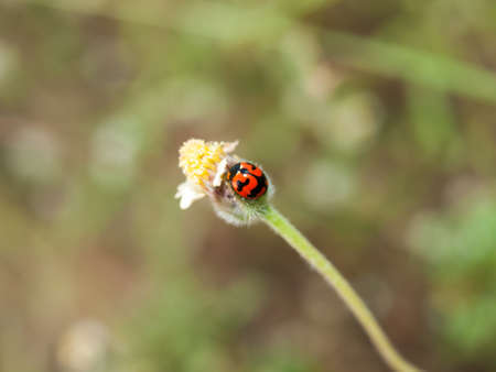 Ladybug and small grass flowers Stock Photo - 18129951